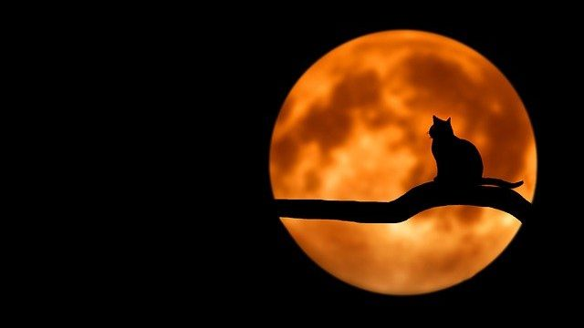 Fakta Menarik tentang Kucing Caracal