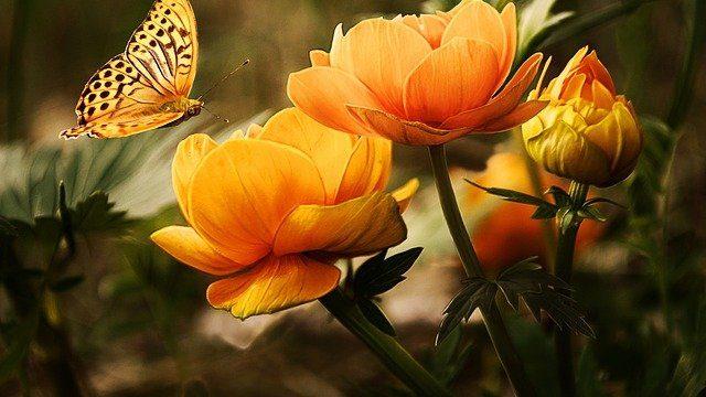 Romansa Cinta dan Arti dari Bunga Mawar Merah
